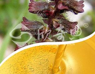 紫蘇籽油(Perilla oil)
