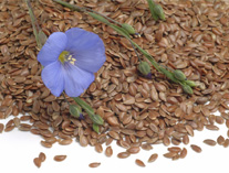 亚麻籽这种好物应该怎么挑选?